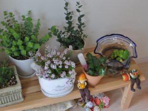 狭い玄関の観葉植物